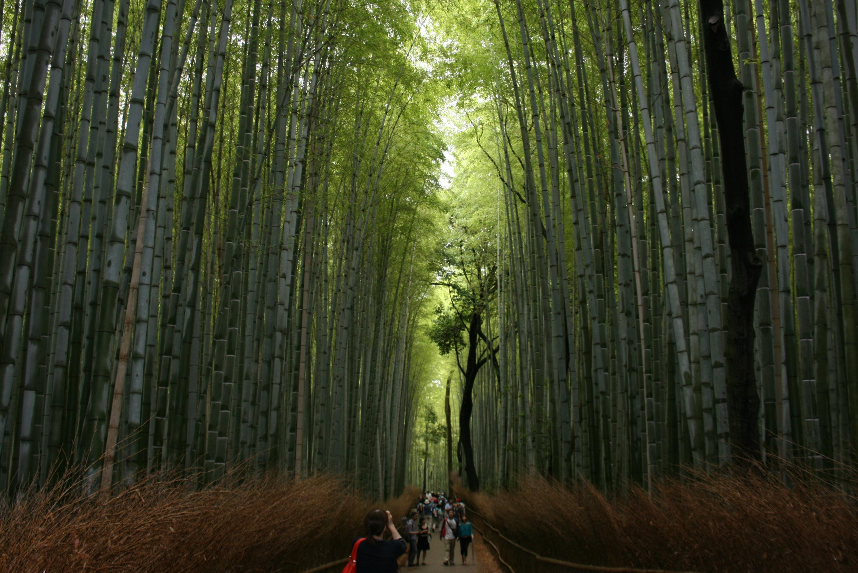 4.竹林の小径